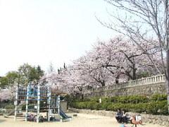 339神戸市灘区篠原北町・護国神社前公園・桜