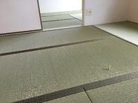 2196賃貸に国産畳表(神戸市灘区)