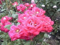 1211北播磨余暇村公園の花