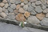 1498神戸市灘区咲いてます