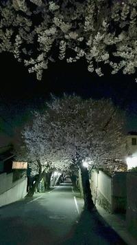 2086夜桜