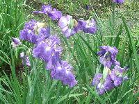 1210北播磨余暇村公園の花