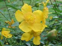1209北播磨余暇村公園の花