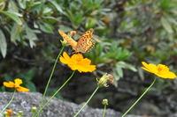 1301花と蝶