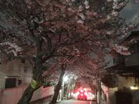 2100夜桜