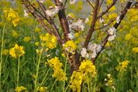 1031神戸市灘区の花便り