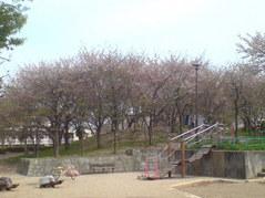 348尼崎市田能西公園・葉桜