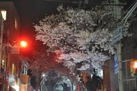 1975夜桜