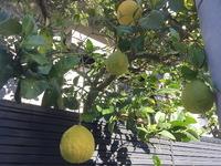 2151謎の柑橘系