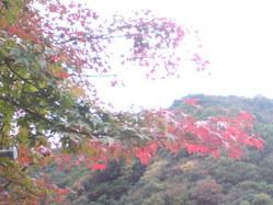 533神戸市北区秋の風景