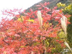 532神戸市北区秋の風景