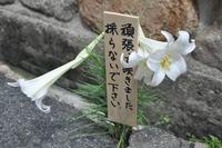 1499神戸市灘区咲いてます