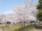 331大阪市鶴見区・花博記念公園鶴見緑地