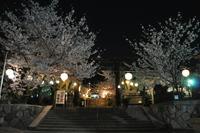 1044神戸市灘区護国神社、夜桜