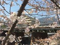 2096今年の桜