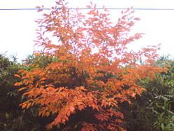 530神戸市北区秋の風景