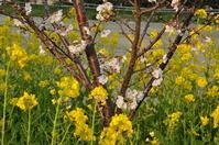 1030神戸市灘区の花便り