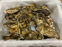 2416久美浜の牡蠣
