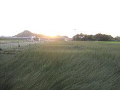 710畳表のい草刈り取り、熊本県八代市