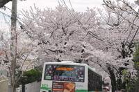 2107桜のトンネル