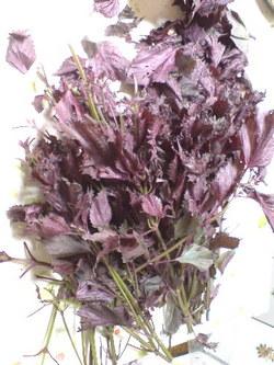 406無農薬栽培の紫蘇・1