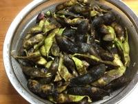 1681丹波の黒枝豆
