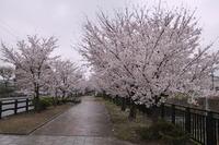 1381奈良県香芝市新築住宅の新畳、無農薬畳表使用。