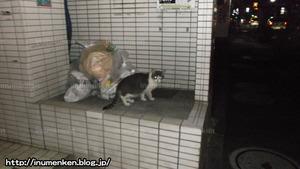 n_s_376(路上の猫(足立区・一ツ家)