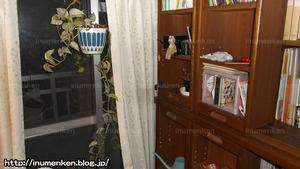 m_r_25(自分の部屋の写真_観葉植物