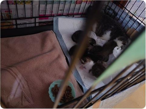 百合 ご 猫 隊 救援 犬 中谷 ブログ みなし 犬猫みなしご救援隊( NPO法人