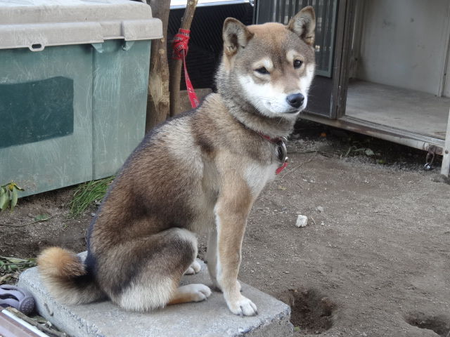 【外で飼える犬は何?】代表的な犬種を7つ ...