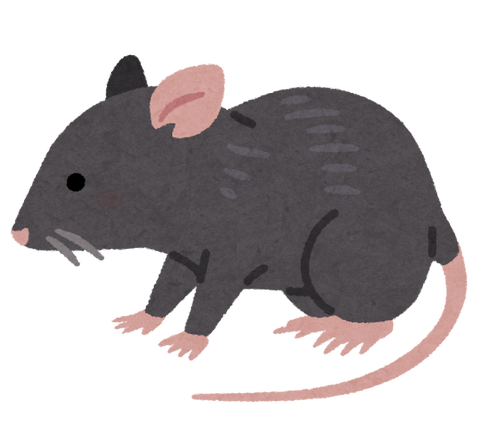 animal_rat_black