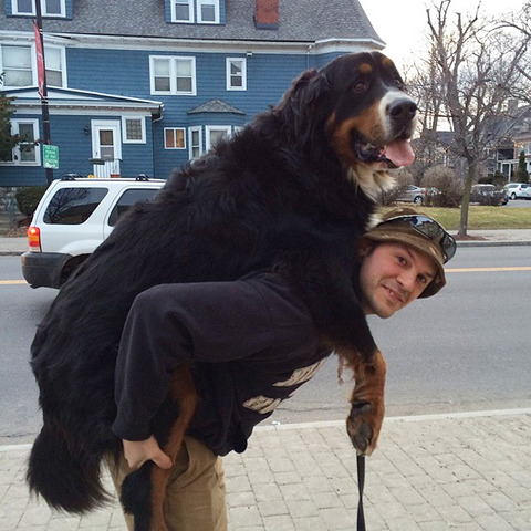 big-dog-9