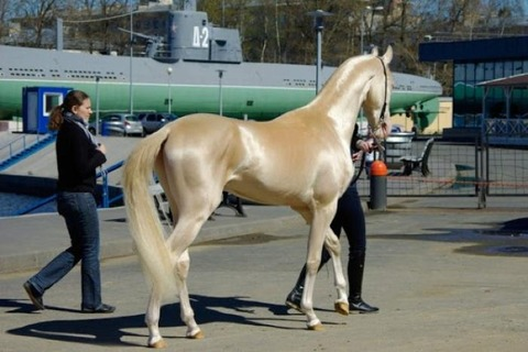 rare-and-beautiful-horses-02