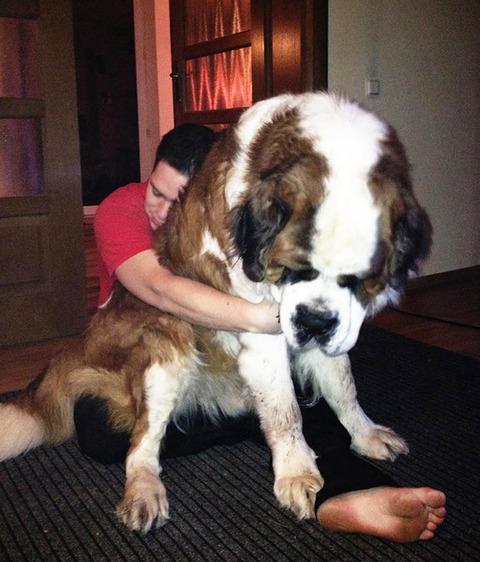 big-dog-18