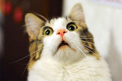 驚いた顔をしている猫