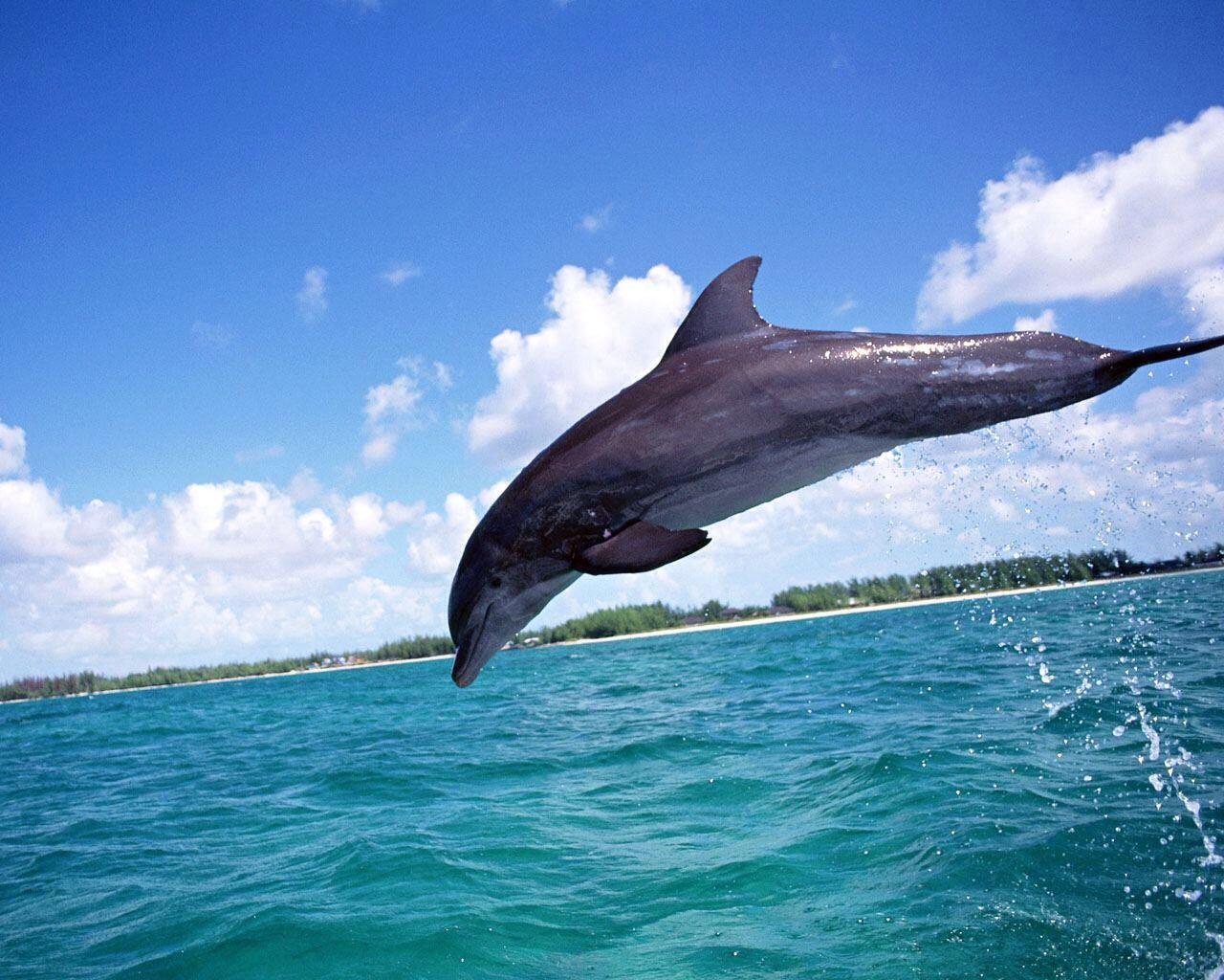イルカの画像 p1_13
