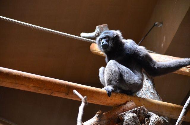 k131_monkey