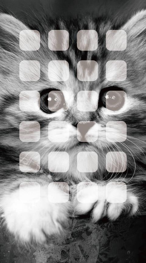 11858_wallpaper_1438x2592_iPhone6_plus_6s_plus