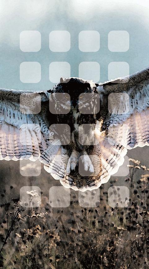 11850_wallpaper_1438x2592_iPhone6_plus_6s_plus