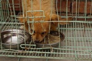 stray-dogs-2-horizontal-gallery