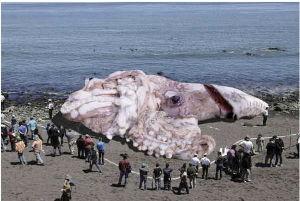 giant-squid-hoax_75355_600x450