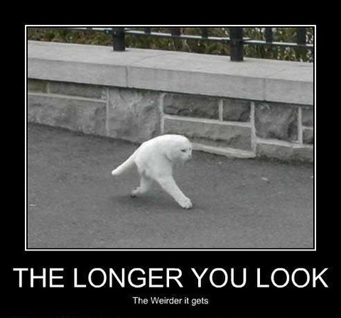 the-longer-you-look-the-weirder-the-two-legged-cat-gets