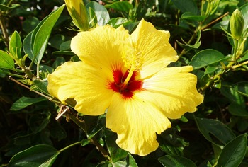 伊良部の花005 (1024x691)