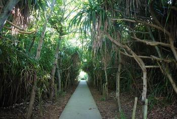 通り池のアダン並木 (1024x690)