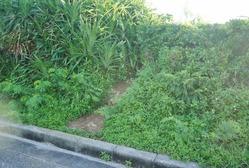 31イグアナ岩への入り口 (1024x690)