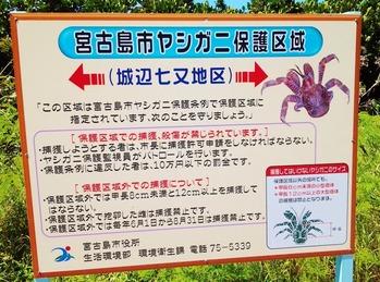ヤシガニ看板 (1024x760)