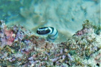 潮だまりのウミヘビ