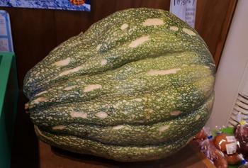 なんこうかぼちゃ01(1024x692)