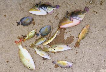 魚の凍死01 (1024x691)